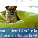 come lavare i denti al cane