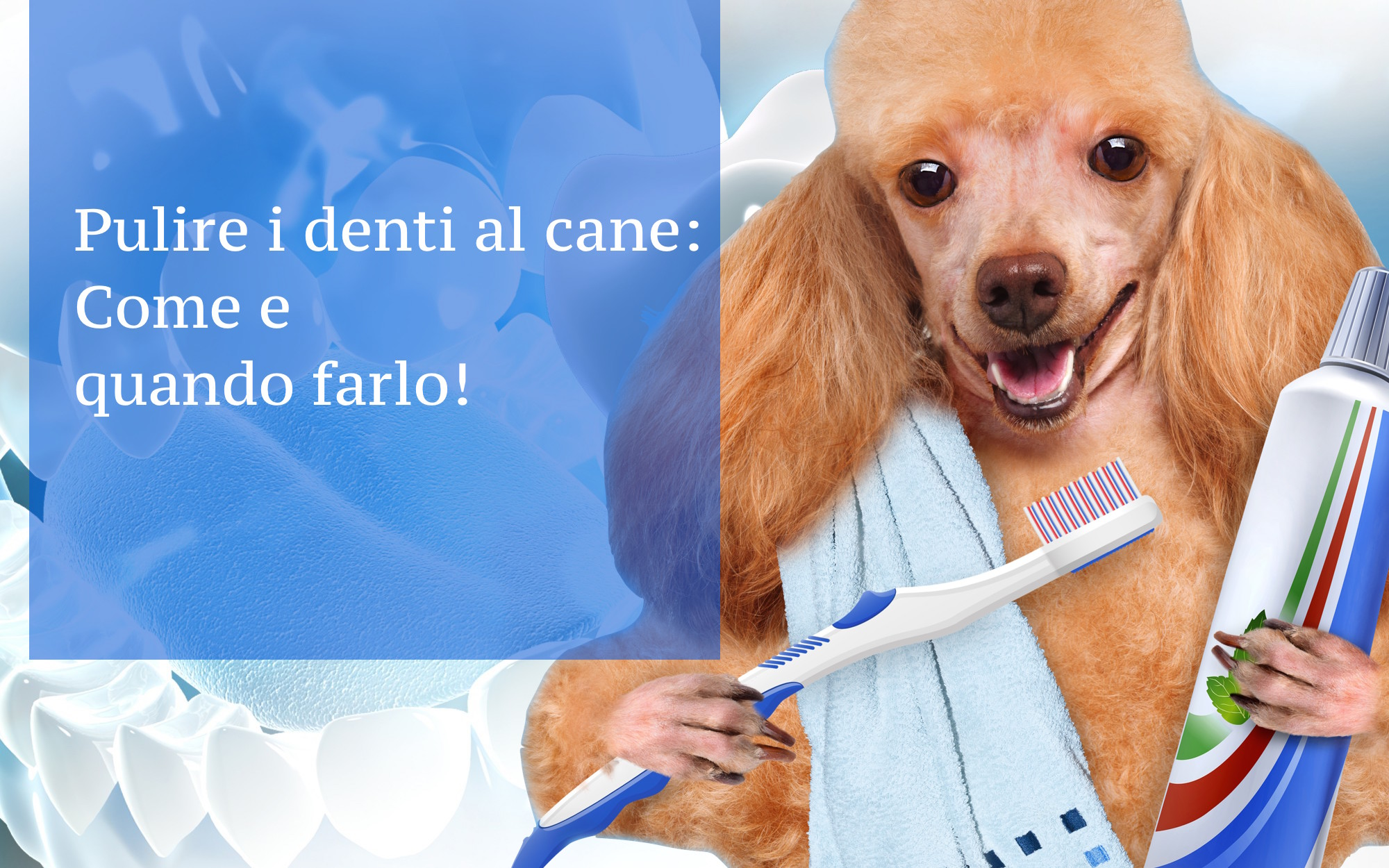come pulire i denti al cane